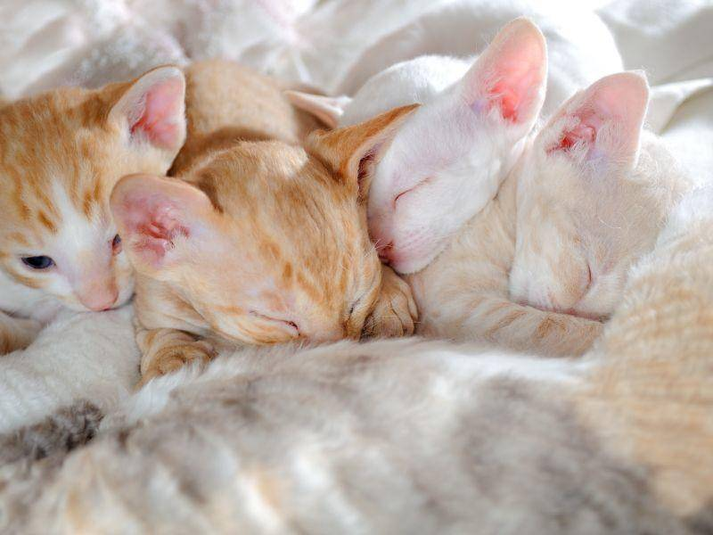 Dieser süßen kleinen Bande wünschen wir schöne Träume! – Bild: Shutterstock / Imageman