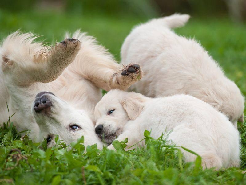 Spielen auf der Wiese macht auch schon den ganz Kleinen Spaß! – Bild: Shutterstock/ Orientgold