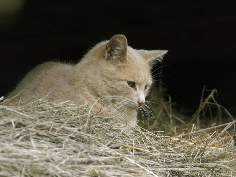 Diese Katze findet ihren Platz im Stroh sehr gemütlich – Bild: Shutterstock / Martin Fowler