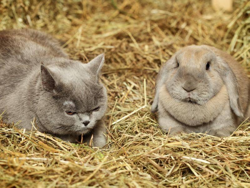 Und auch Katze und Kaninchen lernen sich dort schon mal kennen – Bild: Shutterstock / Petr Malyshev