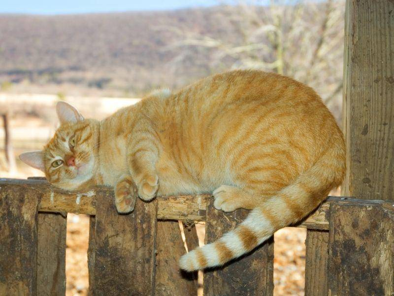 Und noch ein tierisches Sonnenbad – Bild: Shutterstock / Shawn Hinejpg