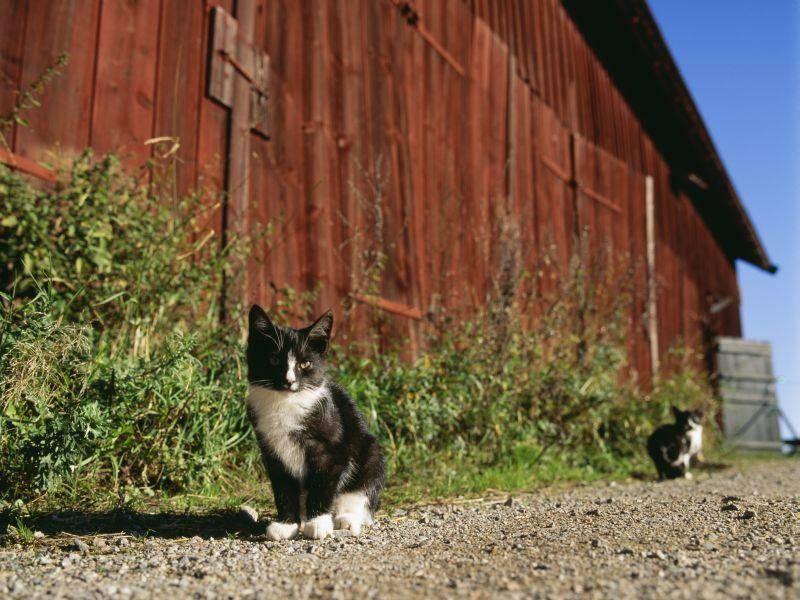 Kleiner Spaziergang auf dem Bauernhof: Das macht Katzenbabys Spaß! – Bild: Shutterstock / BMJ
