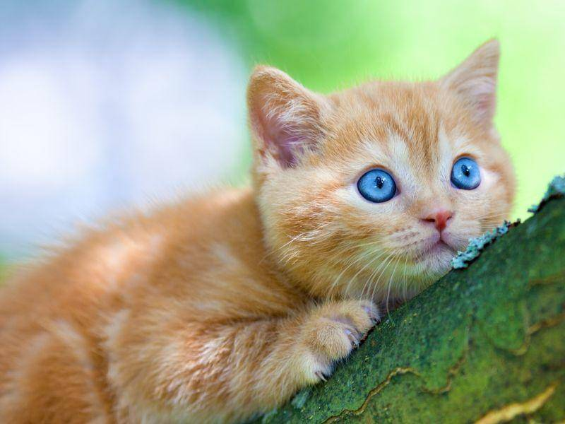 Ob man Bäume hochschleichen kann? Na klar, findet diese Katze! – Bild: Shutterstock / vvvita