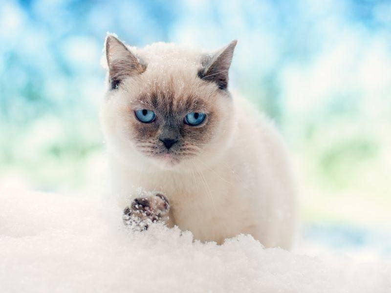 Auch wenn's Spuren hinterlässt: Im Schnee schleicht es sich ganz wunderbar! – Bild: Shutterstock / vvvita