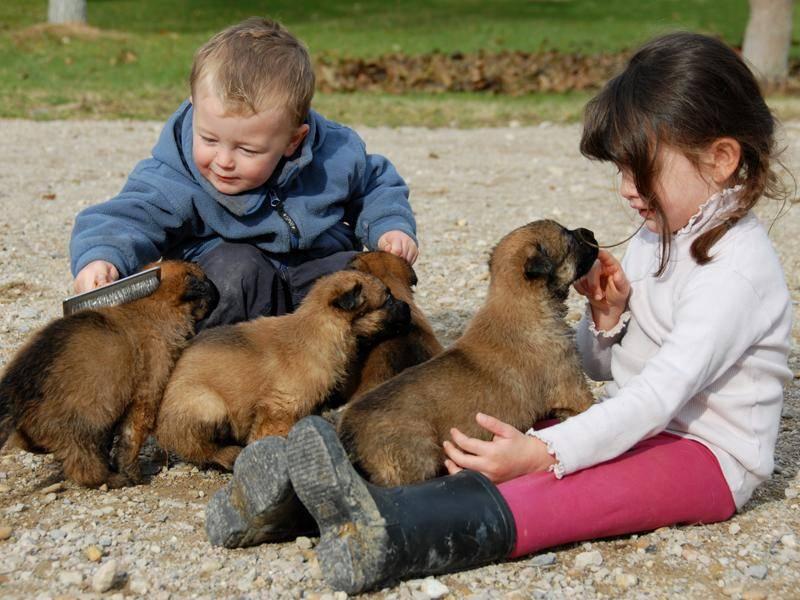Mit Kindern verstehen sich die Familienhunde auch prima – Bild: Shutterstock / cynoclub