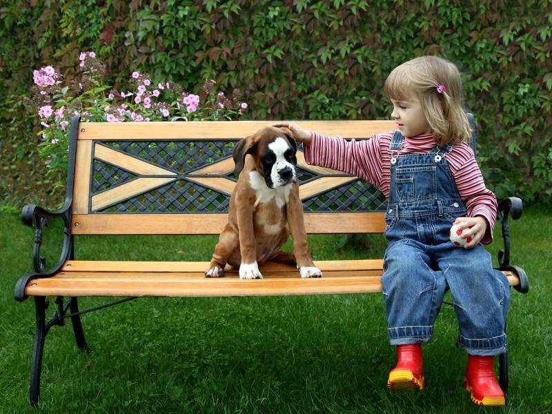 Für ihre kinderliebe Art sind Boxer bekannt – Bild: Shutterstock / Mars Evis