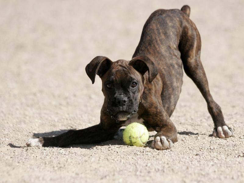 Spielen ist auch ganz wichtig! – Bild: Shutterstock / GoDog-Photo