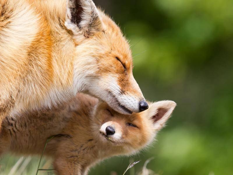 Mit Mama kuschelt es sich aber immer noch am schönsten – Bild: Shutterstock / Menno Schaefer