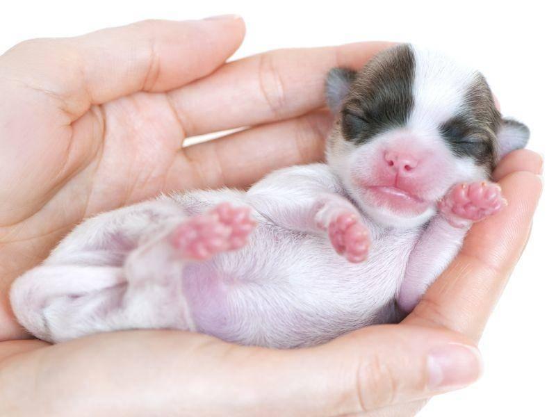 Da hat aber jemand süße Pfötchen! – Bild: Shutterstock / Nikolai Pozdeev