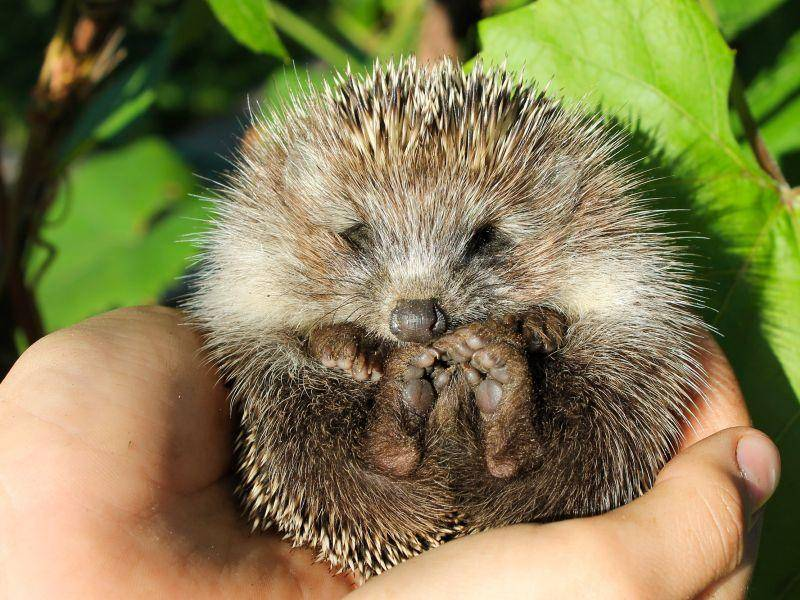 Hallo kleiner Igel! – Bild: Shutterstock / Frolova Elena