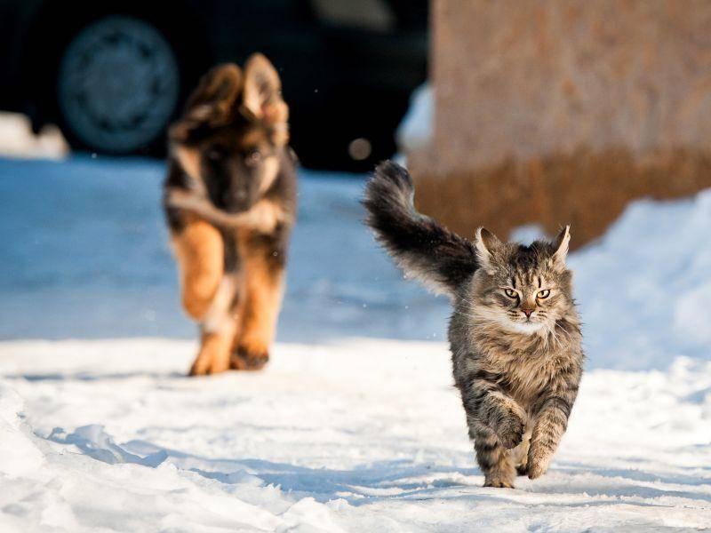 Und manchmal muss man auch vor Nachbars Hund wegrennen – Bild: Shutterstock / Rita Kochmarjova