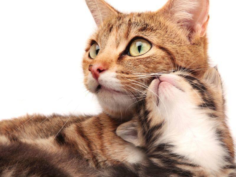 Kuschelalarm bei einem Babykätzchen – Bild: Shutterstock / Foonia