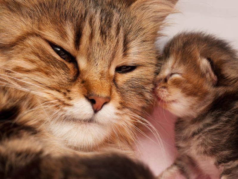 Bussi von einem kuscheligen Babykätzchen – Bild: Shutterstock / Lubava