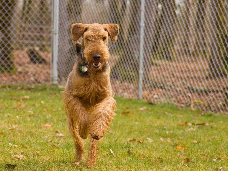 Noch ein großes Hobby des Hundes: Rennen! – Bild: Shutterstock / Gina Callaway