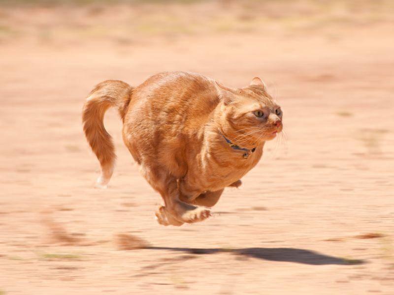 Gut, dass Katzen nicht geblitzt werden können! – Bild: Shutterstock / Sari ONeal
