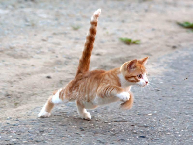 """""""Auf Los geht's los!"""", denkt sich wohl diese junge rote Katze – Bild: Shutterstock / Mitrofanov Alexander"""