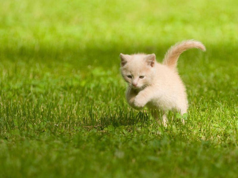 Besonders schön für eine junge Katze: Das erste Mal richtig rennen! – Bild: Shutterstock / Tony Campbell