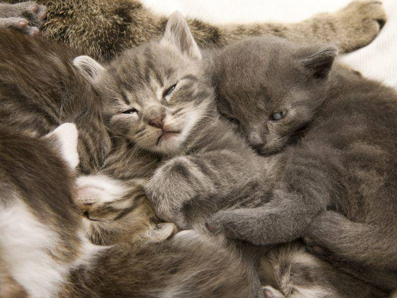 Na, wie viele Katzenbabys zählen Sie? – Bild: Shutterstock / Queue