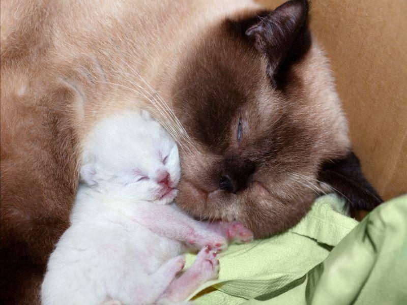 Diese Katzenmama passt sehr gut auf ihren winzigen Schützling auf – Bild: Shutterstock / vvvita