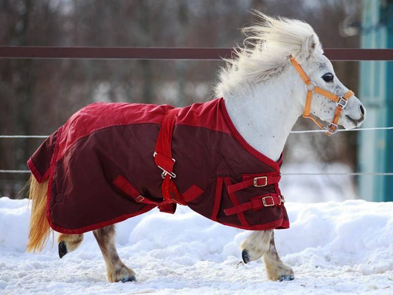 Weitere Einsatzgebiete sind Pferdeschauen oder kleine Kutschen – Bild: Shutterstock / DragoNika