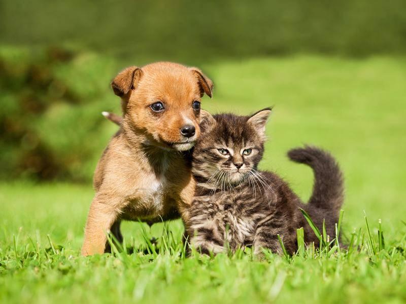 Dieses süßes Tigerkätzchen hat sich einen Freund gesucht – Bild: Shutterstock / Rita Kochmarjova