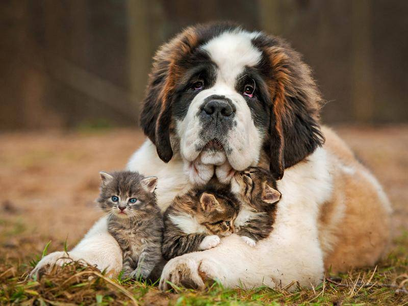 Diese drei Flauschkugeln brauchen sich vor nichts zu fürchten – Bild: Shutterstock / Rita Kochmarjova