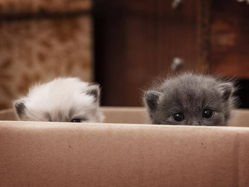 Köpfchen runter, ihr zwei! – Bild: Shutterstock / Dmitrij Skorobogatov
