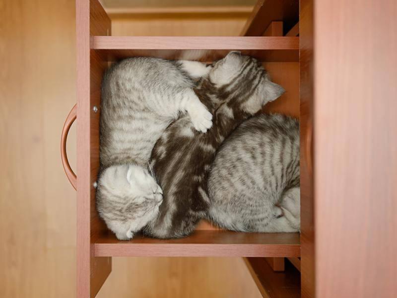 Ein super Kätzchenversteck, nur von oben sind die süßen Stubentiger leider enttarnt – Bild: Shutterstock / Krylova Ksenia