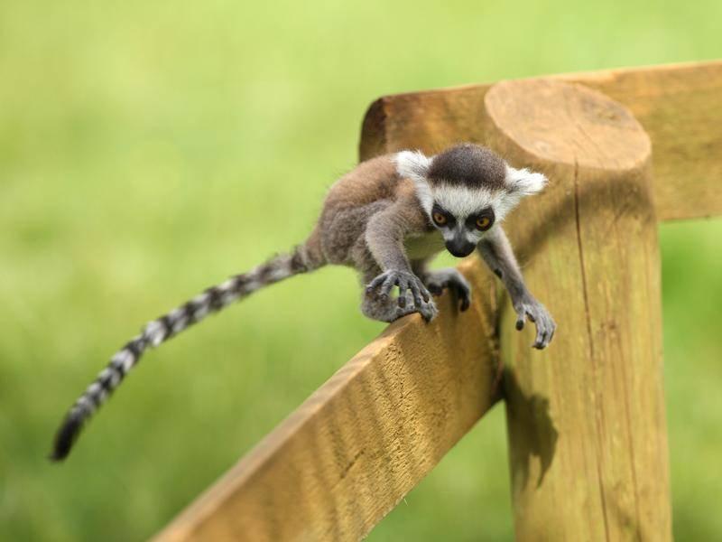 Dieser kleine Kerl übt gerade Klettern – Bild: Shutterstock / S.Cooper Digital