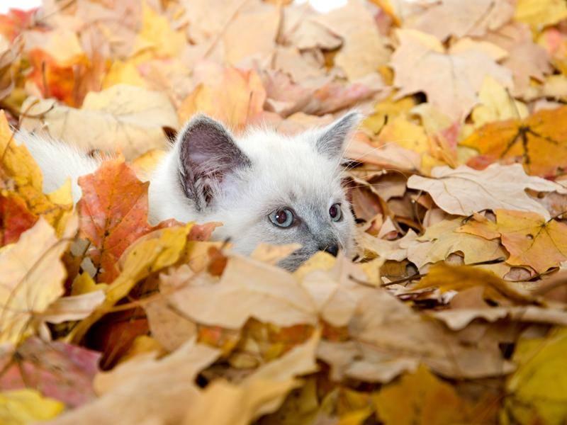 Das mit den Tarnfarben üben wir noch mal, kleine Ragdoll – Bild: Shutterstock / Tony Campbell