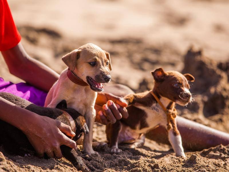 Diese süßen Welpen wollen unbedingt ins Wasser – Bild: Shutterstock / Axel Lauer
