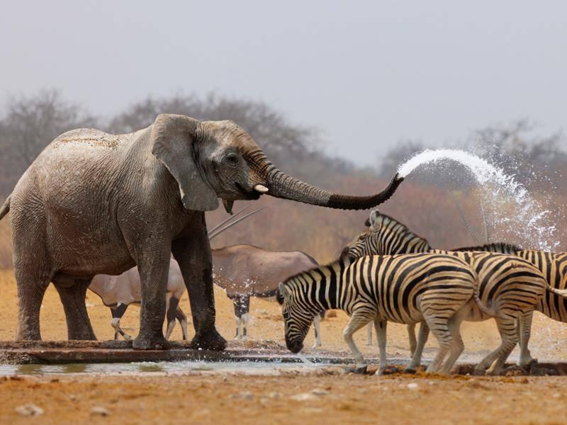 Mit anderen Pflanzenfressern in ihrer Umgebung koexistieren Zebras in der Regel friedlich – Bild: Shutterstock / Johan Swanepoel