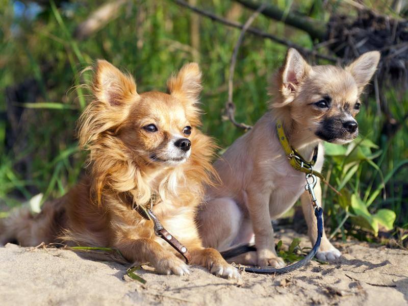 Ziemlich beste Freunde – Bild: Shutterstock / Nikolai Pozdeev