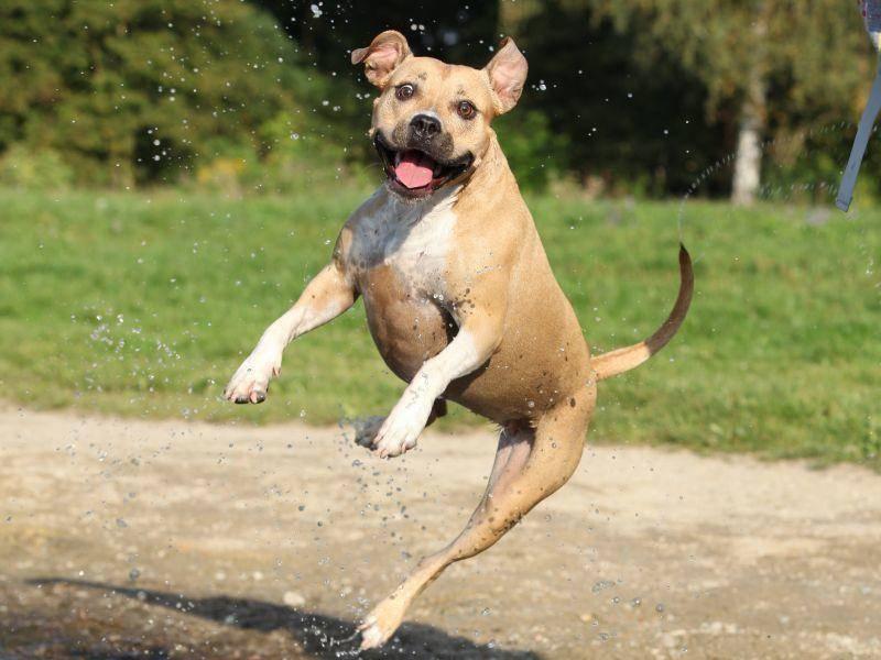 Im Springen ist der begeisterte Sportler ein As – Bild: Shutterstock / Zuzule