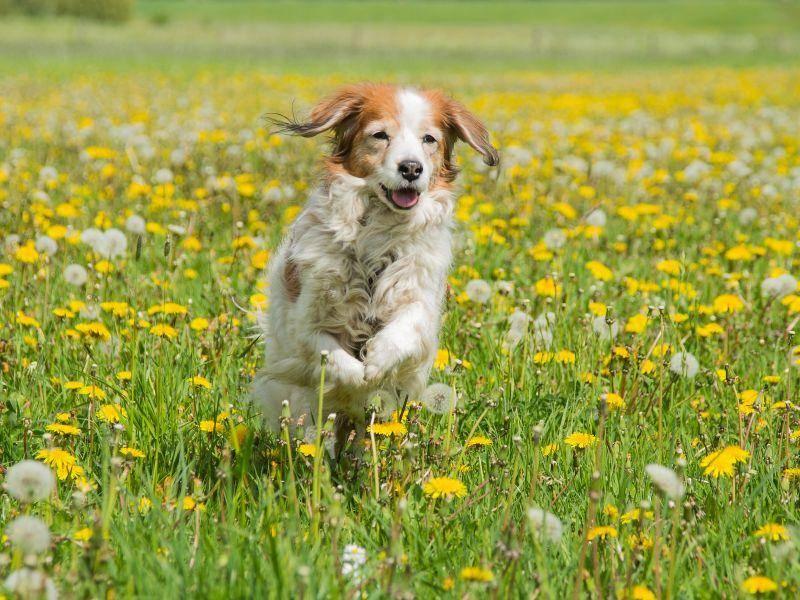 Er läuft gern und ist ein talentierter Sportler – Bild: Shutterstock / Burry van den Brink