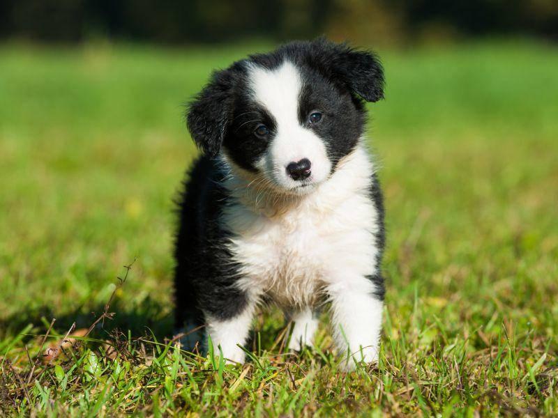 """""""Bekomme ich ein Leckerli?"""" Na, bei diesem Hundeblick bestimmt! – Bild: Shutterstock / Dora Zet"""