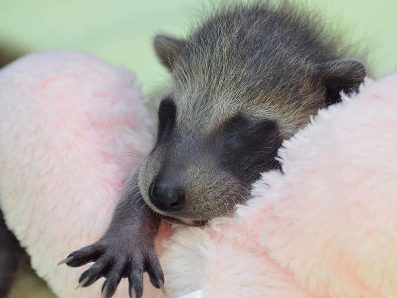 Da stimmt auch dieses neugeborene Bärchen zu – Bild: Shutterstock / Becky Sheridan