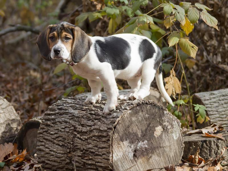 """""""Irgendwie komme ich nicht mehr von dem Baum herunter!"""" – Bild: Shutterstock / Keith Bell"""