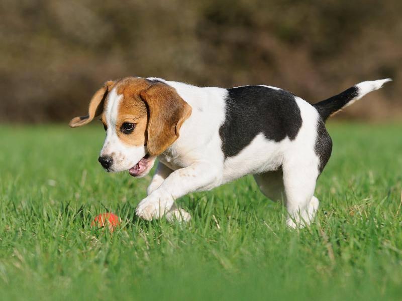 """""""Aaaaah, ein Ball! Komm zu mir!"""" – Bild: Shutterstock / AnetaPics"""