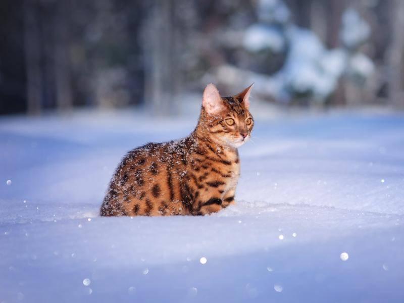 Mit einem schönen, dicken Winterfell lässt es sich auch im Schnee aushalten – Bild: Shutterstock / Anna Tyurina