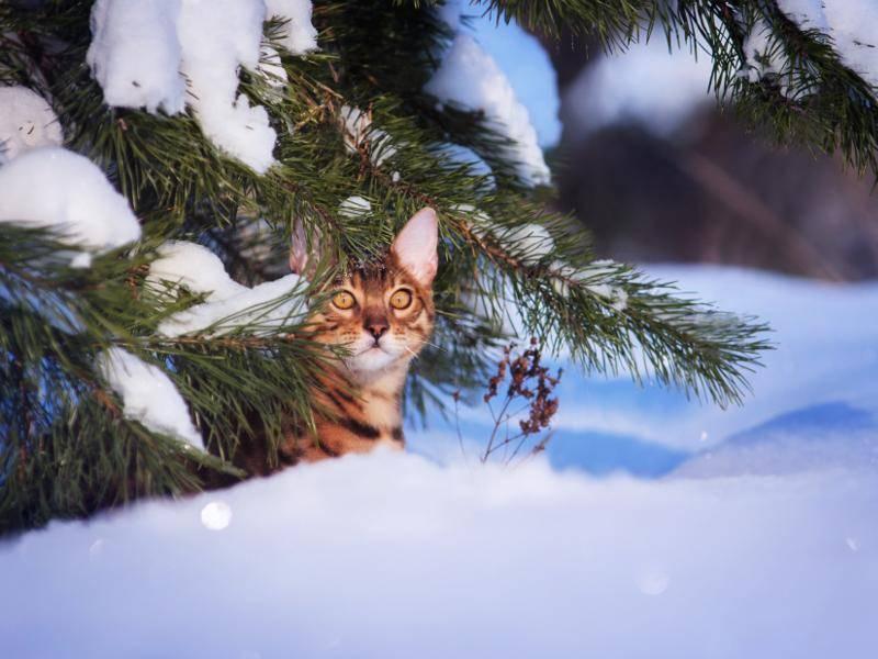 Süßes Versteckspiel im Winter – Bild: Shutterstock / Anna Tyurina