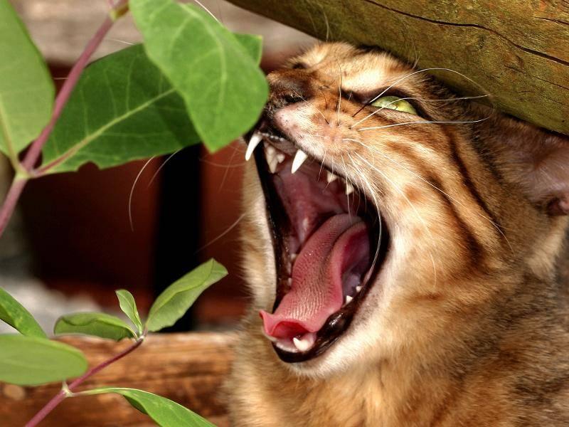 """""""Angriff!"""" – Bild: Shutterstock / marilyn barbone"""