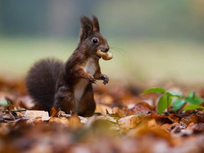 """""""Meine Nuss! Die klaut mir keiner!"""" – Bild: Shutterstock / jurra8"""