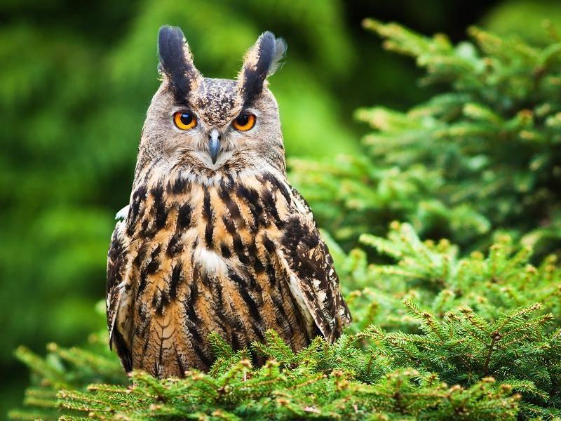 Eulen sind schön und faszinierend – Bild: Shutterstock / jurra8