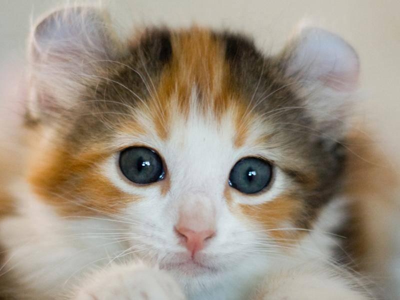 Mit ihren runden Ohren sehen sie fast aus wie Nagetiere – Bild: Shutterstock / Vasiliy Khimenko