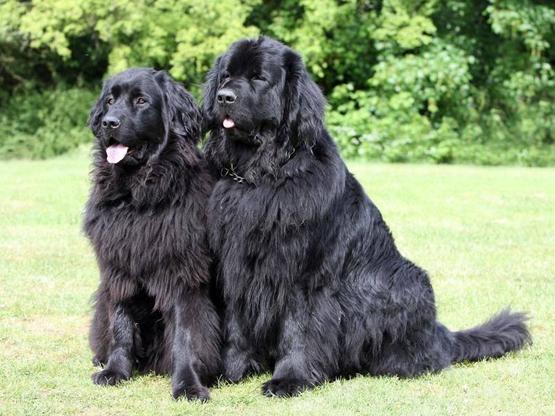 Schön, diese beiden stolzen Tiere, oder? – Bild: Shutterstock / mjt