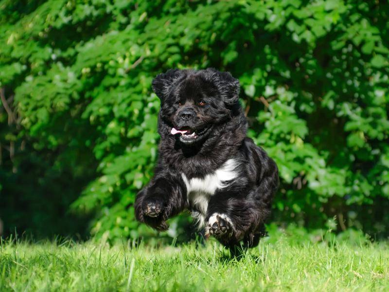 """""""Laufen macht so viel Spaß!"""" – Bild: Shutterstock / Anna Tyurina"""