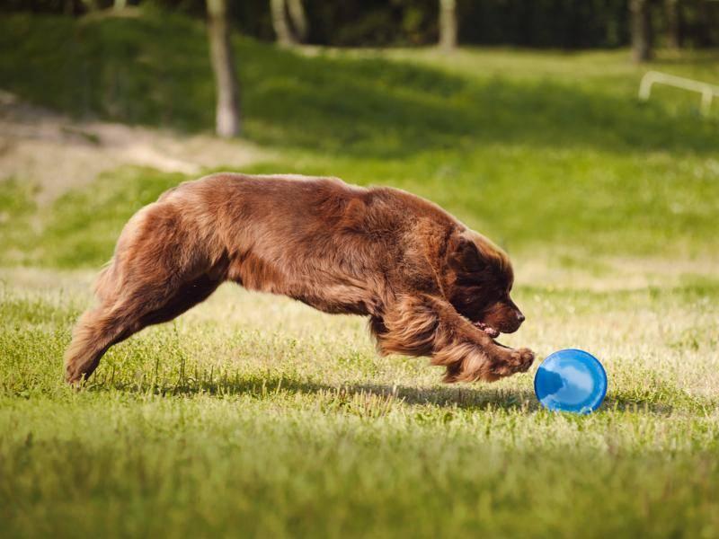 """""""Spielen und Toben ist so toll!"""" – Bild: Shutterstock / Ksenia Raykova"""