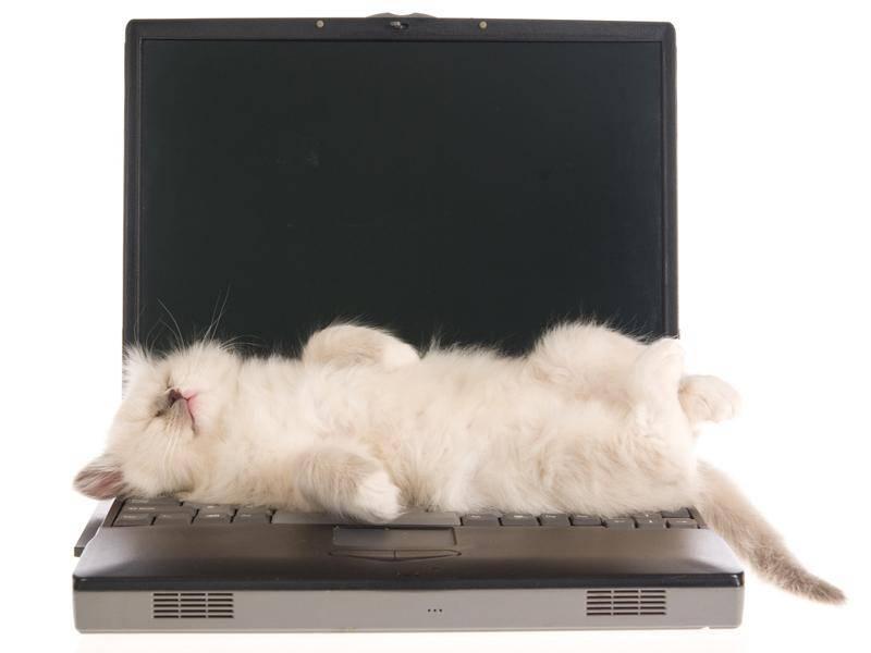 Wer will schon arbeiten, wenn er auch schlafen kann? – Bild: Shutterstock / Linn Currie