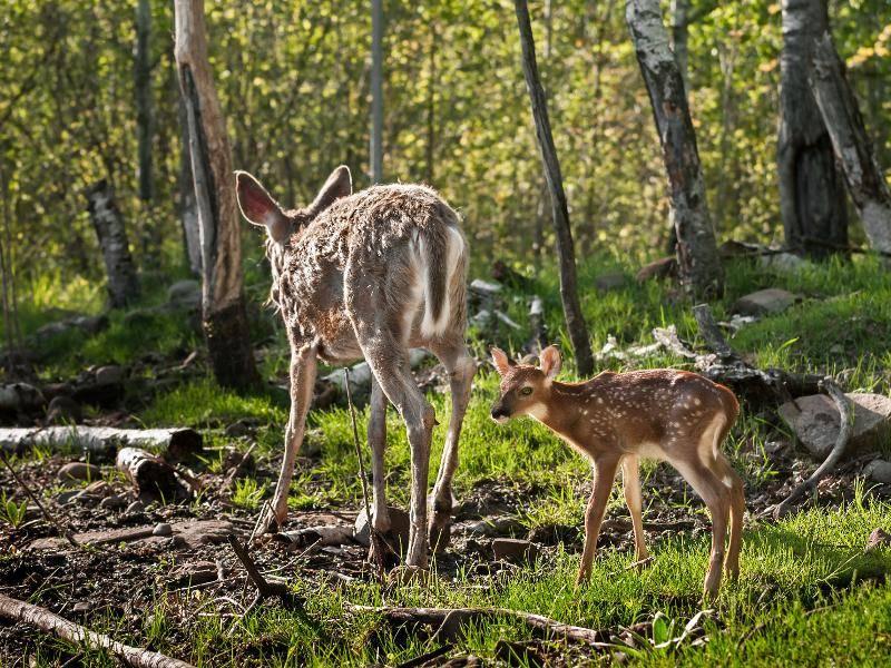 Mama kennt den Weg – Bild: Shutterstock / Holly Kuchera